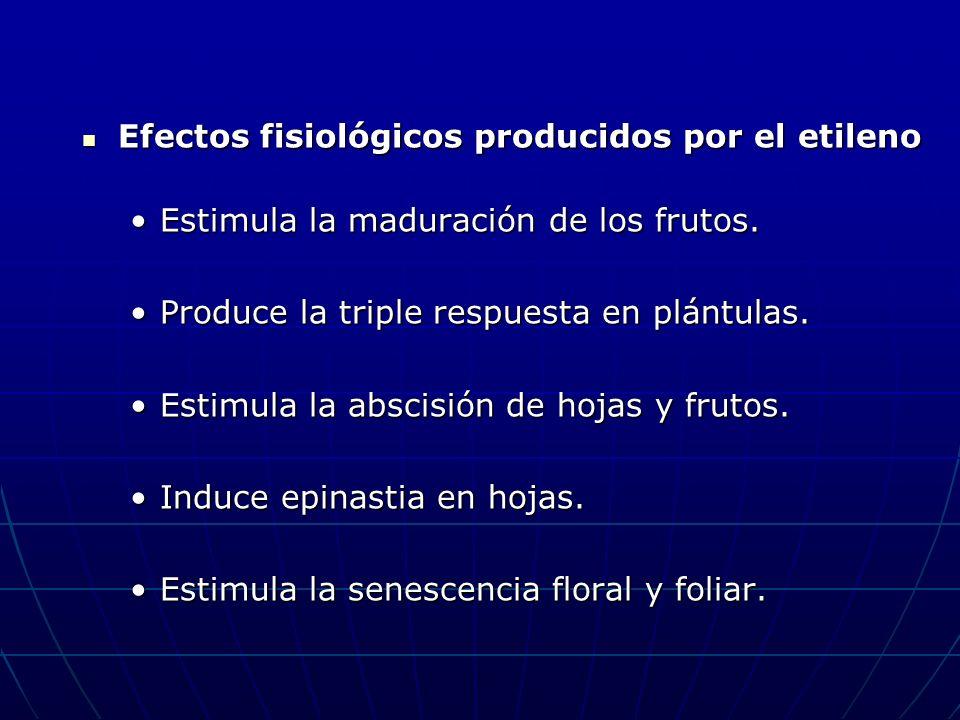 Efectos fisiológicos producidos por el etileno Efectos fisiológicos producidos por el etileno Estimula la maduración de los frutos.Estimula la madurac