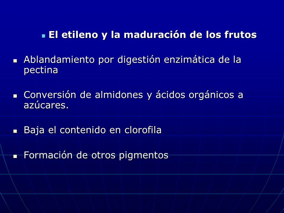 El etileno y la maduración de los frutos El etileno y la maduración de los frutos Ablandamiento por digestión enzimática de la pectina Ablandamiento p