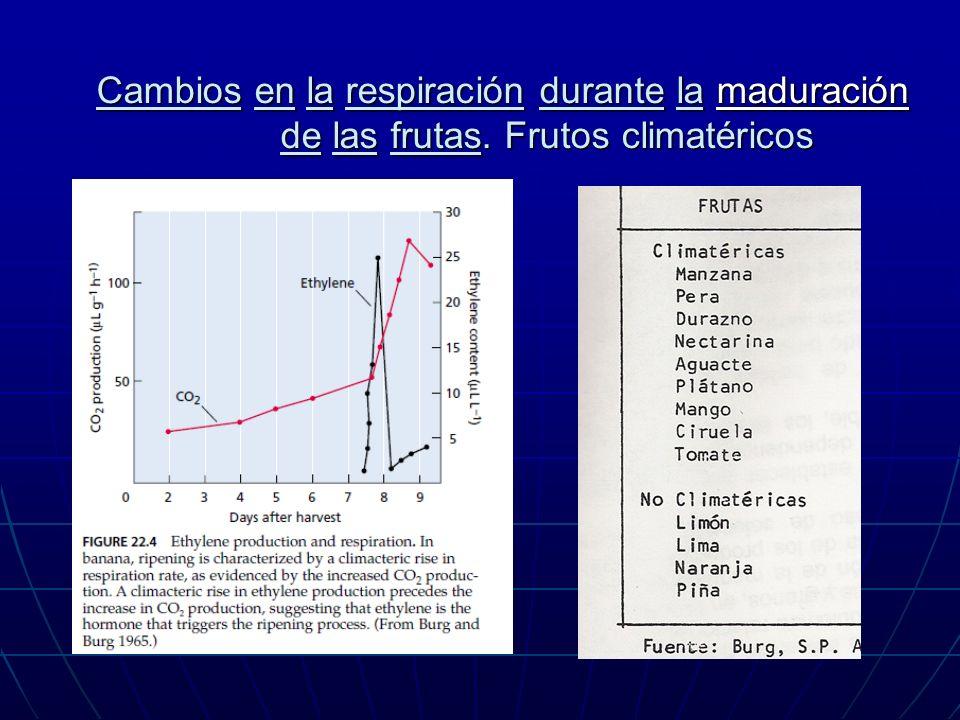Cambios en la respiración durante la maduración de las frutas. Frutos climatéricos