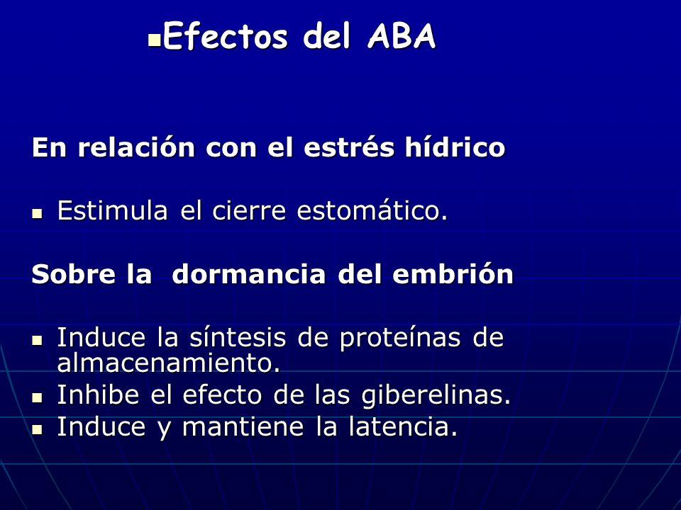 En relación con el estrés hídrico Estimula el cierre estomático. Estimula el cierre estomático. Sobre la dormancia del embrión Induce la síntesis de p