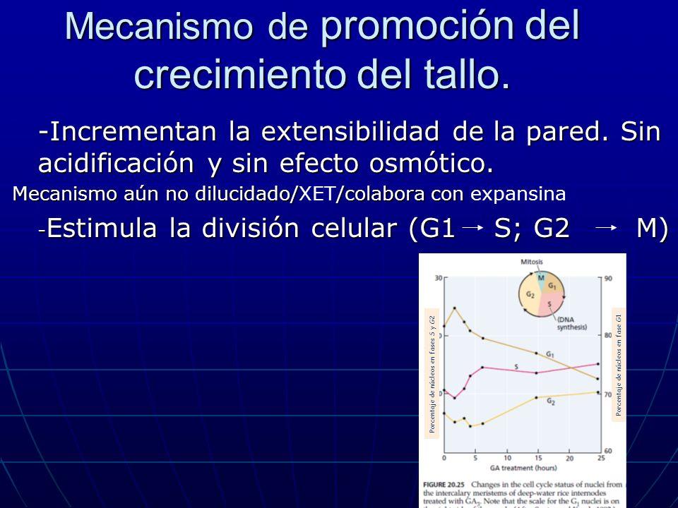 Mecanismo de promoción del crecimiento del tallo. -Incrementan la extensibilidad de la pared. Sin acidificación y sin efecto osmótico. Mecanismo aún n