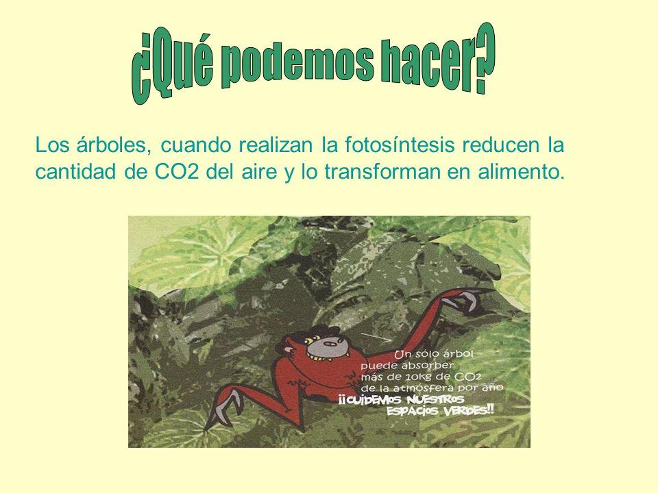 Los árboles, cuando realizan la fotosíntesis reducen la cantidad de CO2 del aire y lo transforman en alimento.