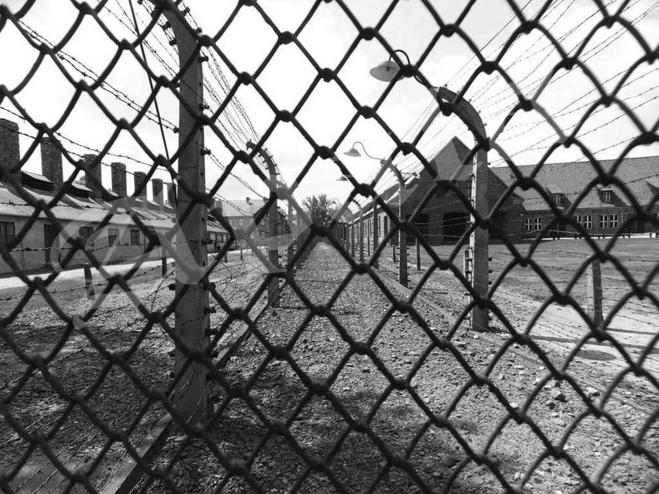 Latas de Zyklon B vacías usadas en los terrenos del campo de concentración.