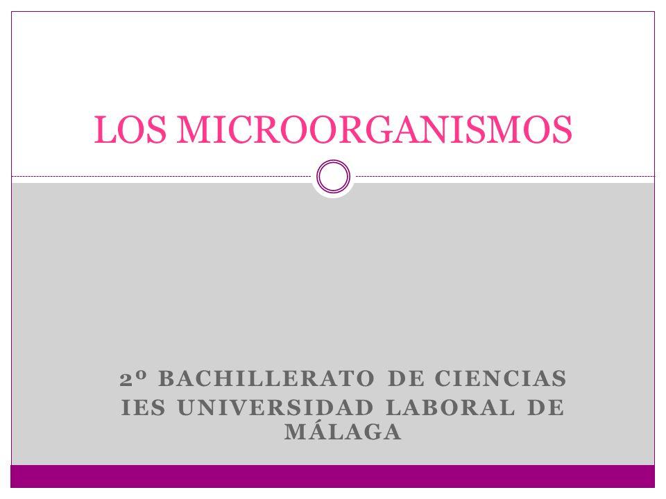 Concepto de microorganismo Los microbios o microorganismos son seres vivos de tamaño microscópico, por eso para su observación es necesario utilizar el microscopio óptico o el electrónico.