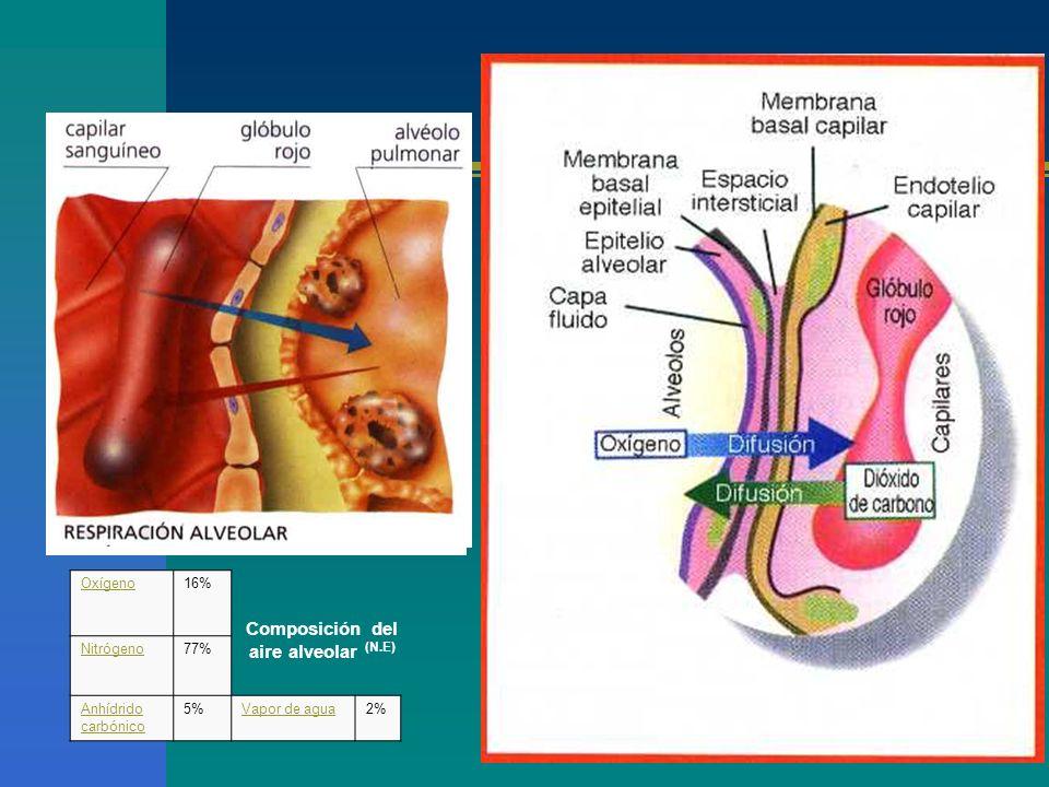 Composición del aire alveolar (N.E) Oxígeno16% Nitrógeno77% Anhídrido carbónico 5%Vapor de agua2%