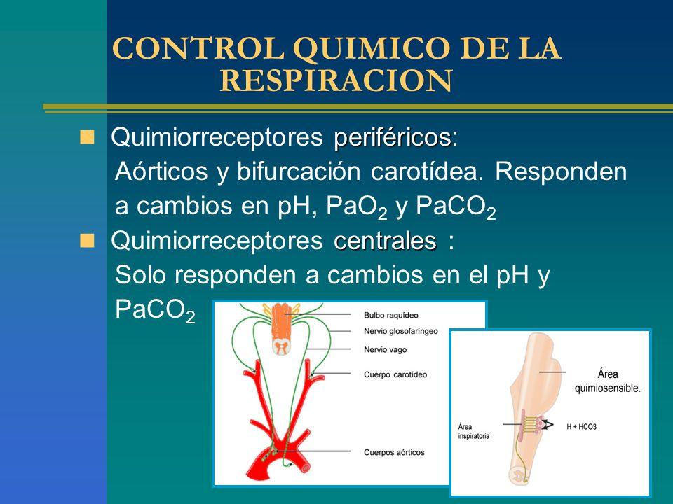 CONTROL QUIMICO DE LA RESPIRACION periféricos Quimiorreceptores periféricos: Aórticos y bifurcación carotídea. Responden a cambios en pH, PaO 2 y PaCO
