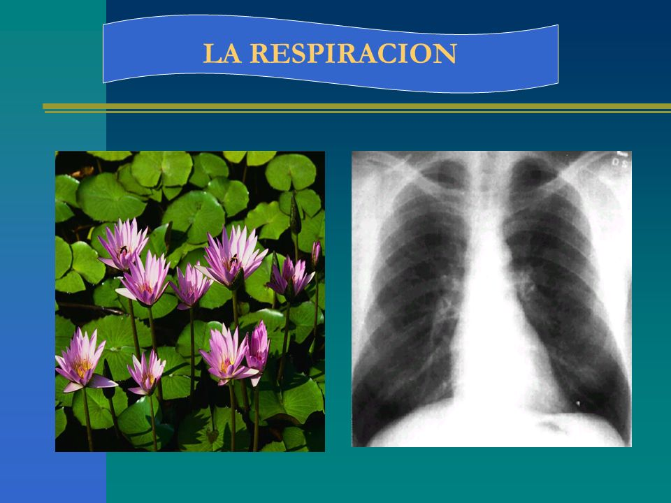 VOLUMENES Volumen de reserva inspiratoria: (VRI) es el volumen que se puede isp.