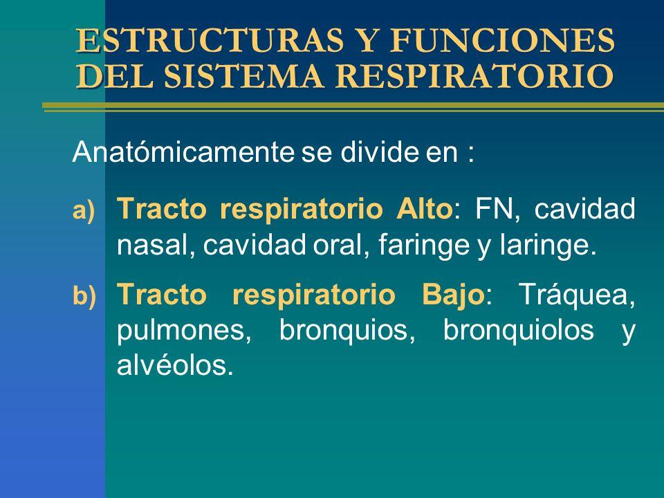 ESTRUCTURAS Y FUNCIONES DEL SISTEMA RESPIRATORIO Anatómicamente se divide en : a) Tracto respiratorio Alto: FN, cavidad nasal, cavidad oral, faringe y