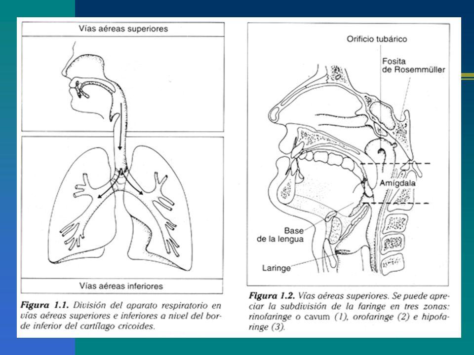 Volumen Circulante (VC): cantidad de aire que entra y sale en los pulmones en un ciclo I y E (10 ml x kg peso) Espacio Muerto (EM):cantidad de aire que queda al final de la I.