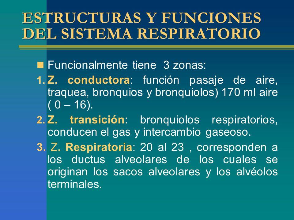 ESTRUCTURAS Y FUNCIONES DEL SISTEMA RESPIRATORIO Funcionalmente tiene 3 zonas: 1. Z. conductora: función pasaje de aire, traquea, bronquios y bronquio