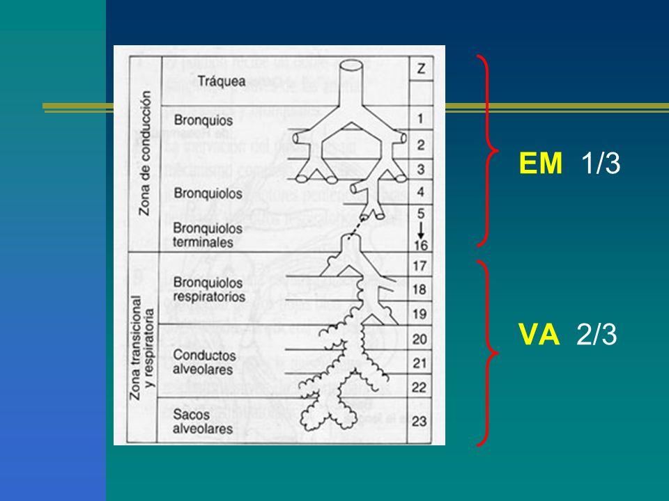 LOS PULMONES Órgano elástico Compliance Pulmonar Fibras de elastina y colágeno Un hombre N aprox150,000 U.F 15 millones de ductus y 375 millones de alvéolos La relación de gas entre alvéolos y ductus es 2:1