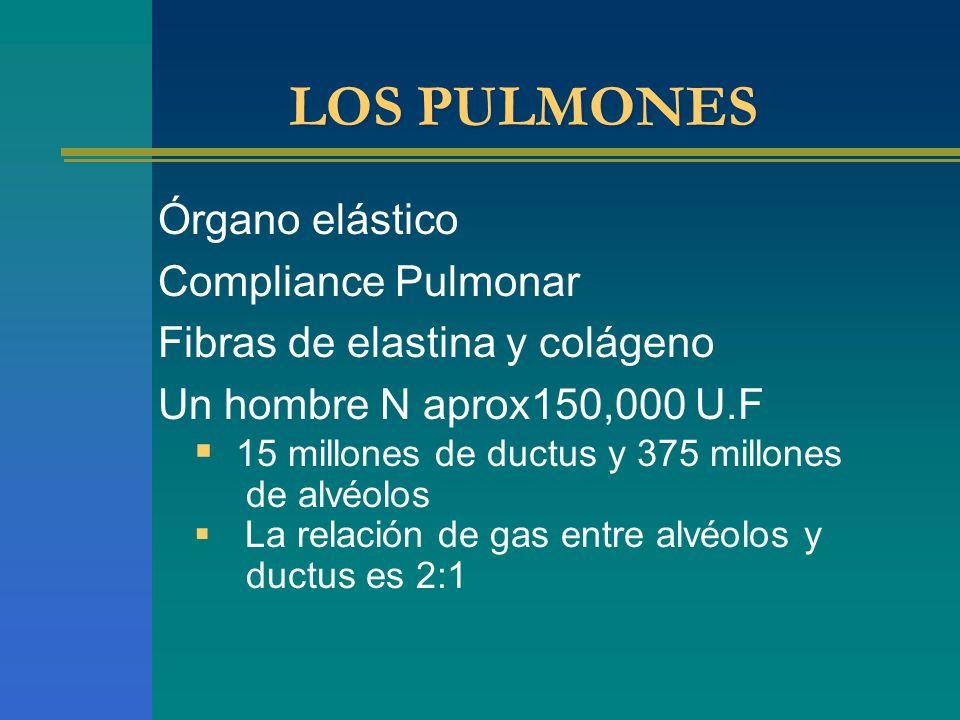 LOS PULMONES Órgano elástico Compliance Pulmonar Fibras de elastina y colágeno Un hombre N aprox150,000 U.F 15 millones de ductus y 375 millones de al