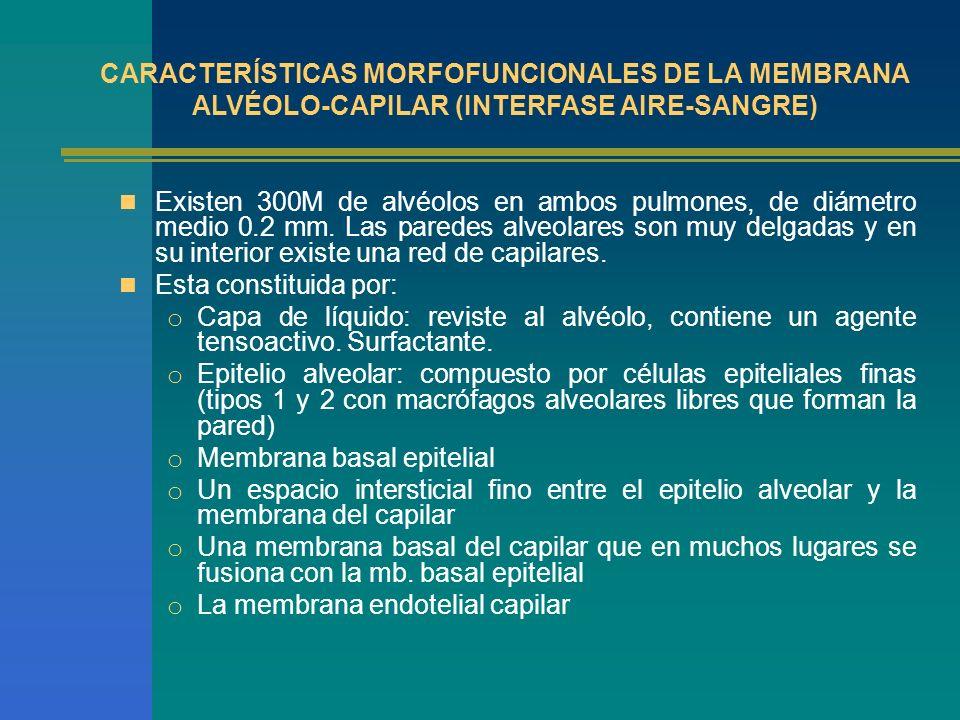 RELACIÓN VENTILACIÓN PERFUSIÓN V/Q Gas y sangre en proporciones adecuadas V/Q, llamada también cociente respiratorio : 0.8 a 1.