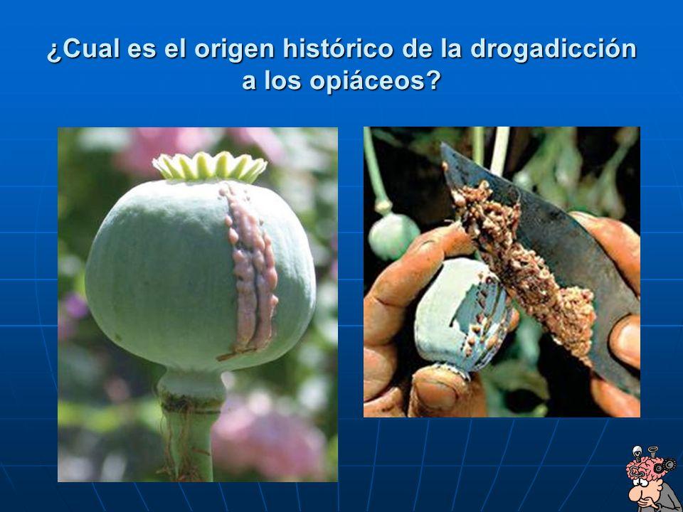 HISTORIA El opio sale de la planta Papaver somniferum album, adormidera) y de él se extrae la morfina y la heroína.