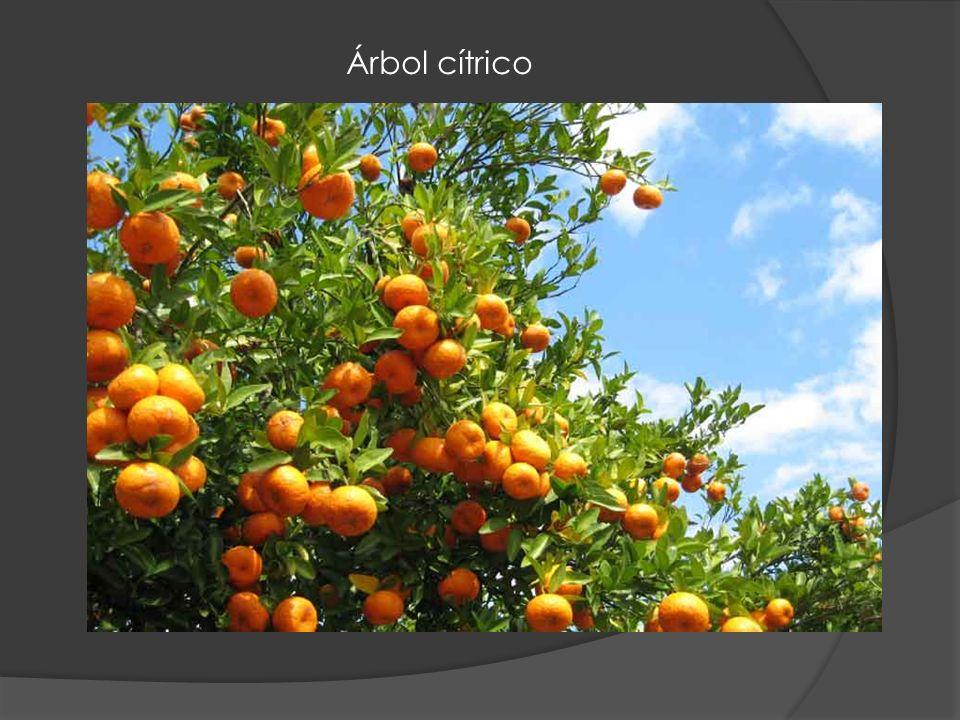 Manzanas es uno de los muchos frutos que crecen en Siria
