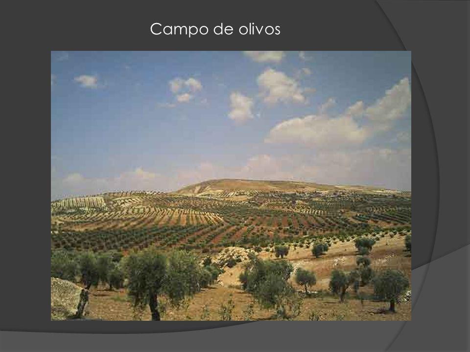 Damasco antiguo