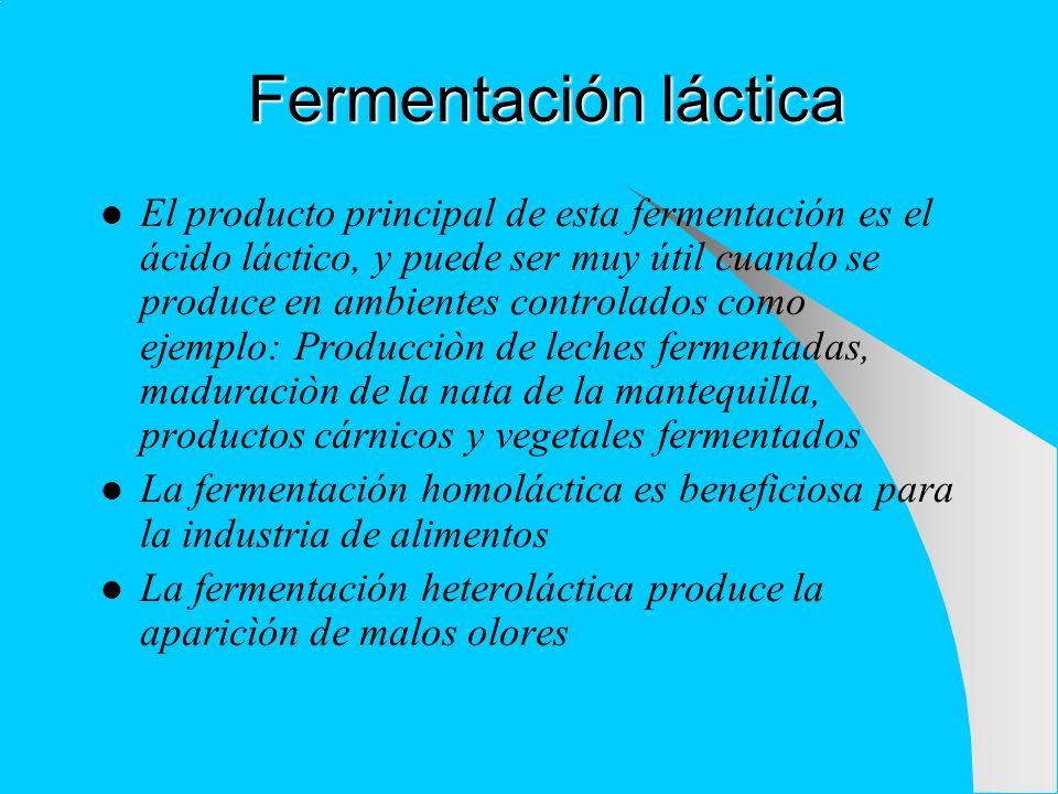 Fermentación láctica El producto principal de esta fermentación es el ácido láctico, y puede ser muy útil cuando se produce en ambientes controlados c