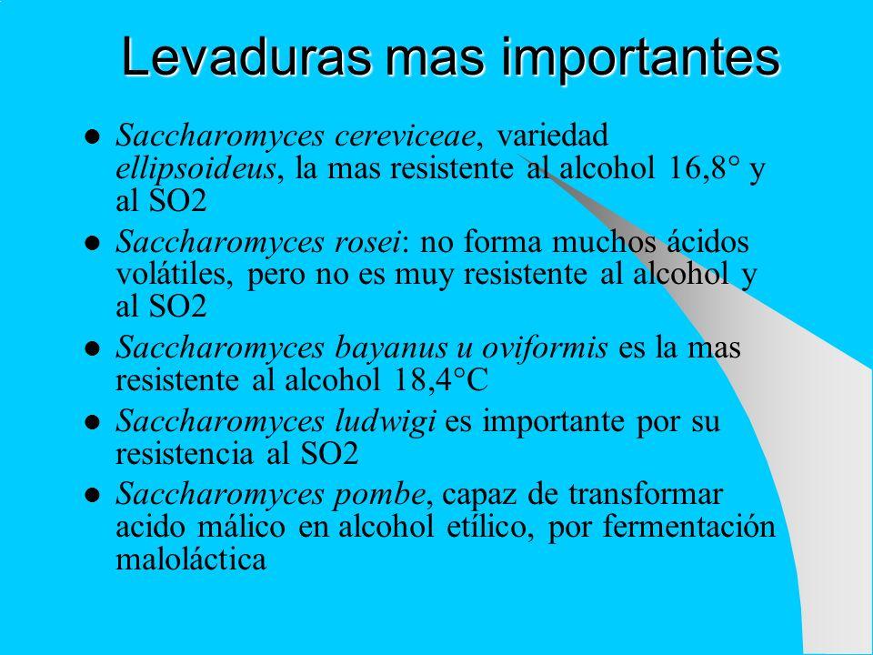 Levaduras mas importantes Saccharomyces cereviceae, variedad ellipsoideus, la mas resistente al alcohol 16,8° y al SO2 Saccharomyces rosei: no forma m
