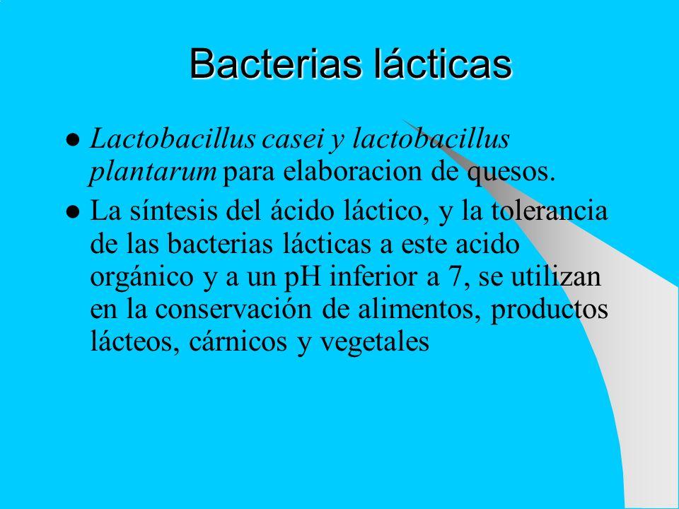 Bacterias acéticas Se caracterizan por su capacidad de oxidar el etanol a ácido acético a pH ácido Son aerobias estrictas Ejemplo: acetobacter en la producción de vinagre Para que las bacterias acéticas puedan desarrollarse en forma adecuada, el medio debe estar bien oxigenado y con temperaturas superiores a los 20°C