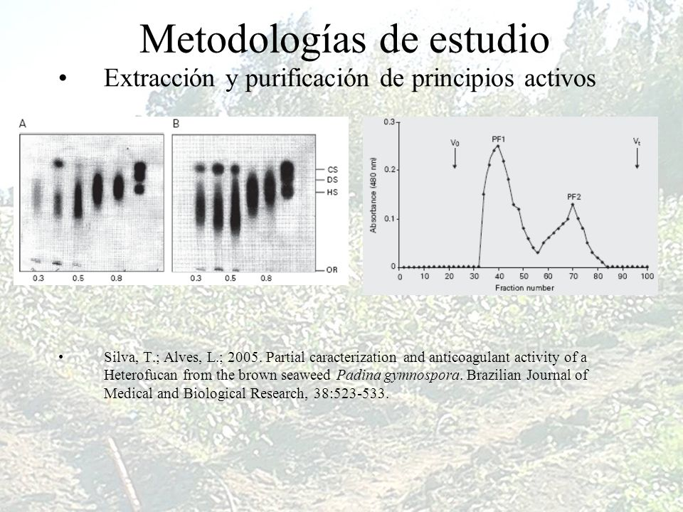 Metodologías de estudio Extracción y purificación de principios activos Silva, T.; Alves, L.; 2005. Partial caracterization and anticoagulant activity