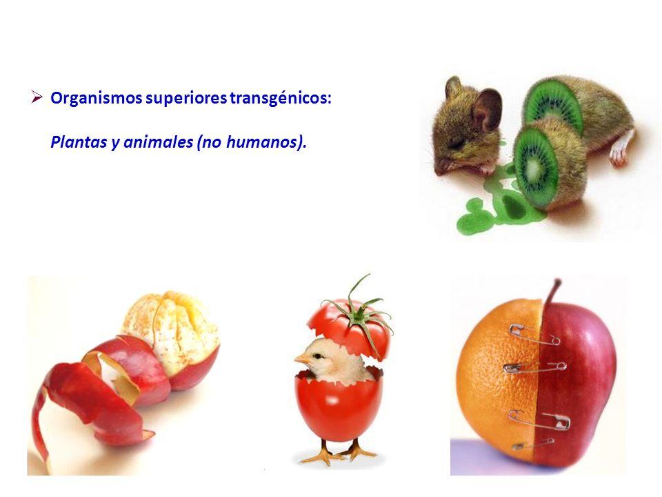 Organismos superiores transgénicos: Plantas y animales (no humanos).