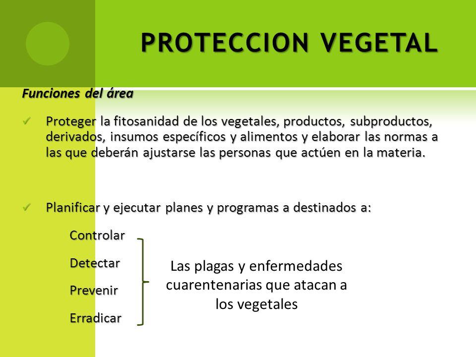 PROTECCION VEGETAL Funciones del área Proteger la fitosanidad de los vegetales, productos, subproductos, derivados, insumos específicos y alimentos y