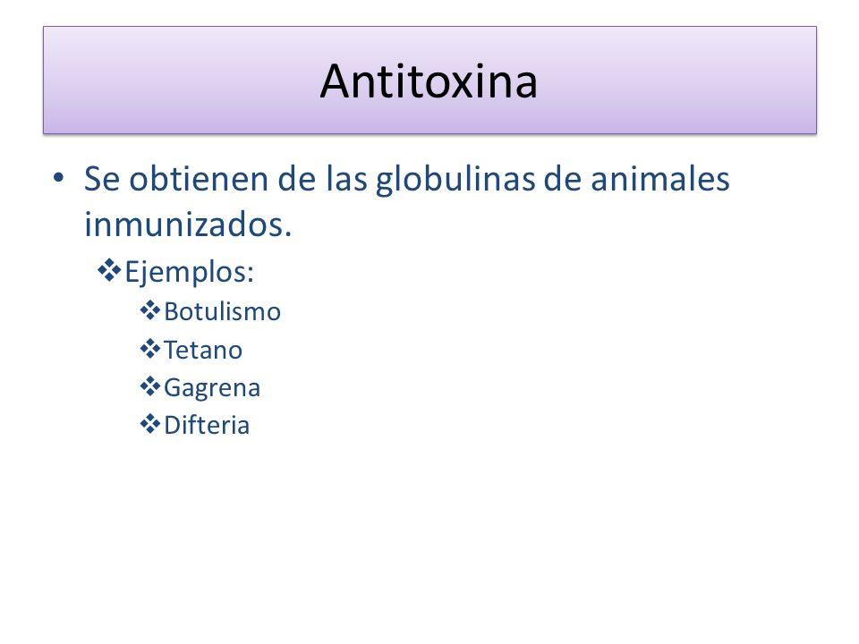 Antitoxina Se obtienen de las globulinas de animales inmunizados. Ejemplos: Botulismo Tetano Gagrena Difteria