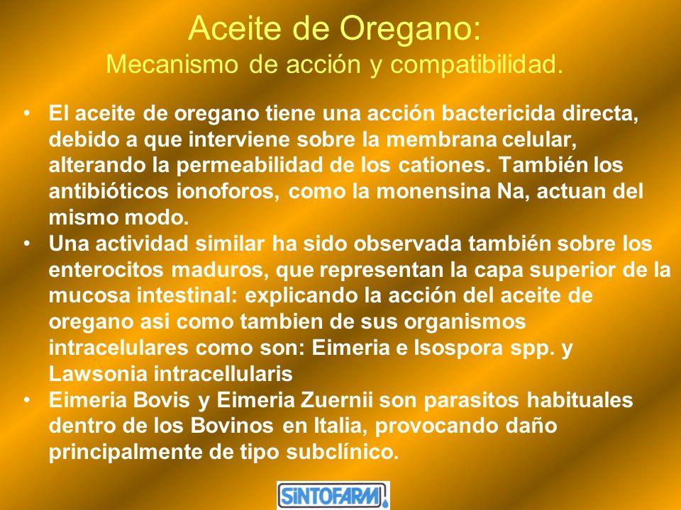 Aceite de Oregano: Mecanismo de acción y compatibilidad. El aceite de oregano tiene una acción bactericida directa, debido a que interviene sobre la m