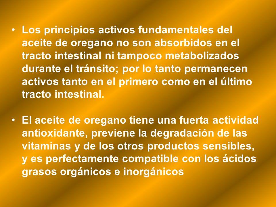 Los principios activos fundamentales del aceite de oregano no son absorbidos en el tracto intestinal ni tampoco metabolizados durante el tránsito; por