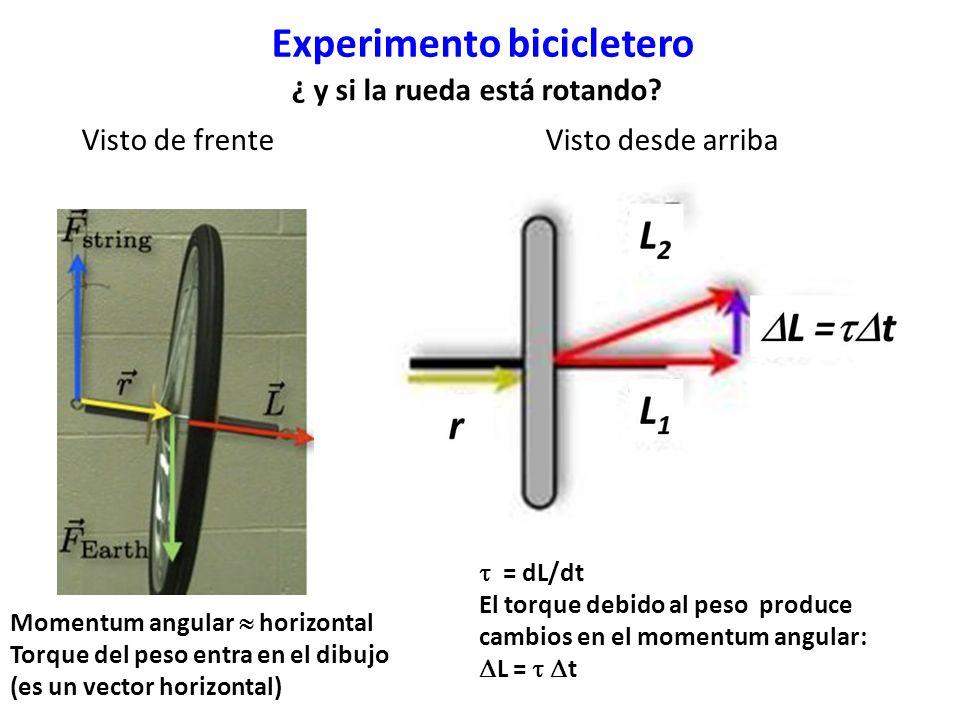 Visto de frente Visto desde arriba Momentum angular horizontal Torque del peso entra en el dibujo (es un vector horizontal) = dL/dt El torque debido al peso produce cambios en el momentum angular: L = t ¿ y si la rueda está rotando?