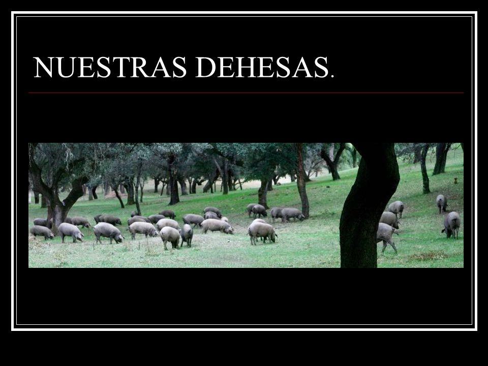 UBICACIÓN: SIERRA DE ARACENA