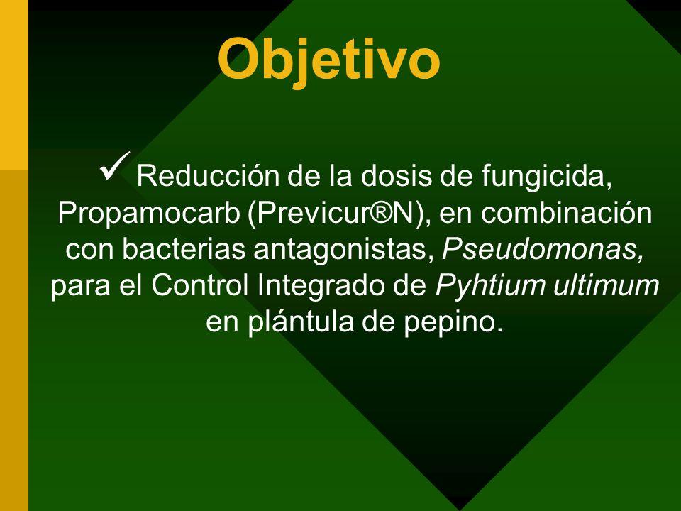 Objetivo Reducción de la dosis de fungicida, Propamocarb (Previcur®N), en combinación con bacterias antagonistas, Pseudomonas, para el Control Integra
