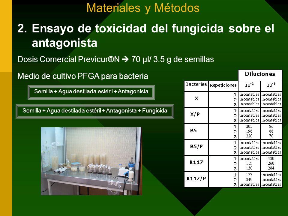 Materiales y Métodos 2.Ensayo de toxicidad del fungicida sobre el antagonista Dosis Comercial Previcur®N 70 µl/ 3.5 g de semillas Medio de cultivo PFG
