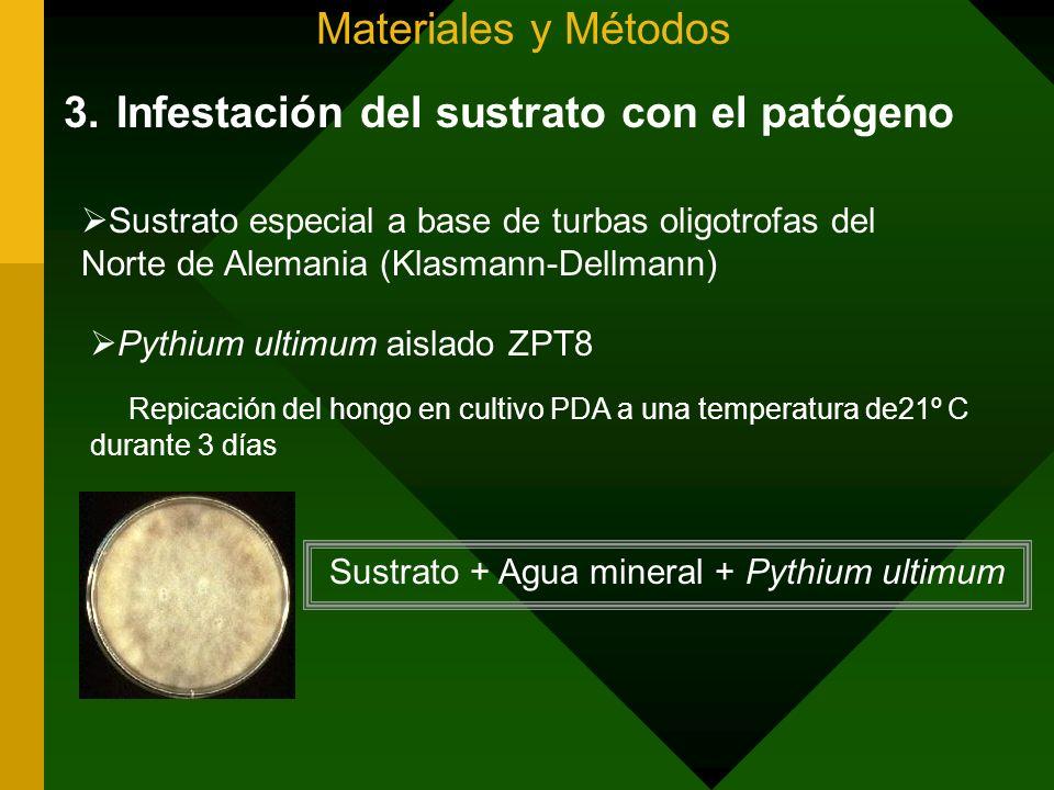 Materiales y Métodos 3.Infestación del sustrato con el patógeno Sustrato especial a base de turbas oligotrofas del Norte de Alemania (Klasmann-Dellman