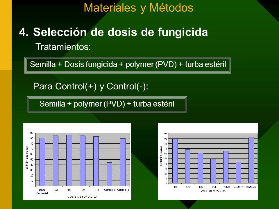 Materiales y Métodos Para Control(+) y Control(-): 4.Selección de dosis de fungicida Semilla + Dosis fungicida + polymer (PVD) + turba estéril Semilla