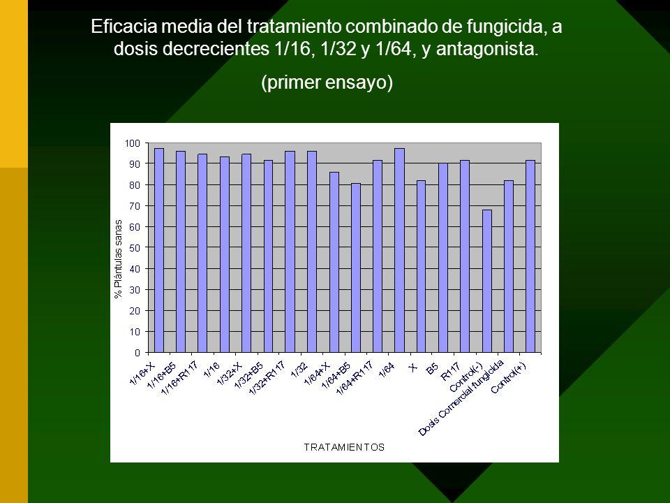 Eficacia media del tratamiento combinado de fungicida, a dosis decrecientes 1/16, 1/32 y 1/64, y antagonista. (primer ensayo)