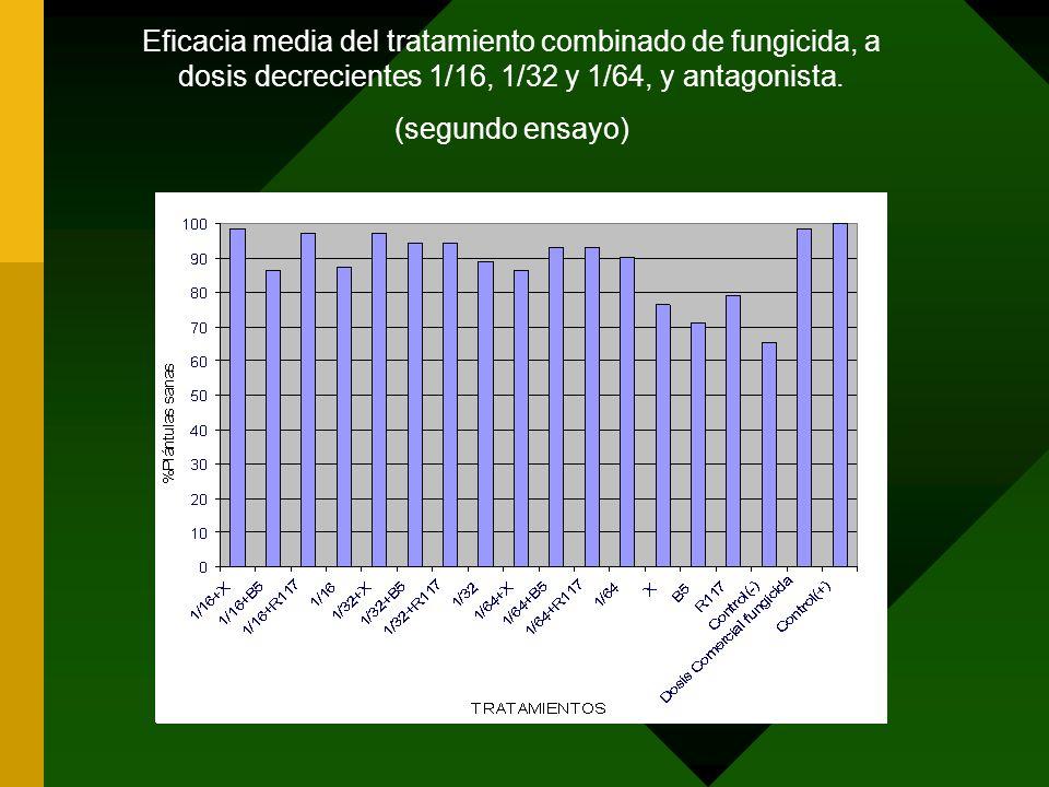 Eficacia media del tratamiento combinado de fungicida, a dosis decrecientes 1/16, 1/32 y 1/64, y antagonista. (segundo ensayo)