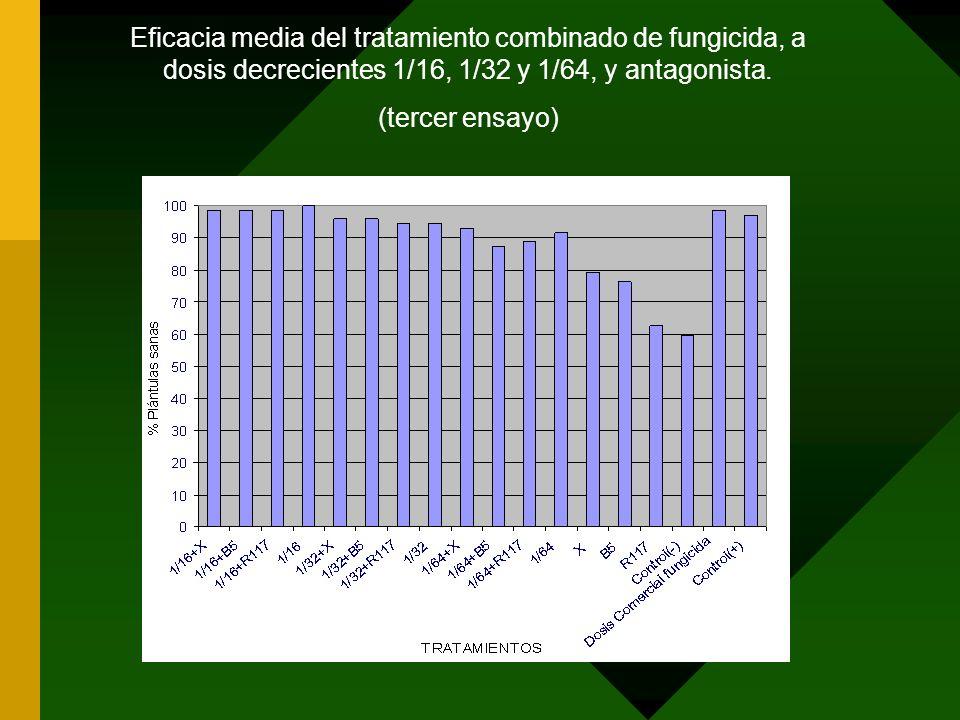 Eficacia media del tratamiento combinado de fungicida, a dosis decrecientes 1/16, 1/32 y 1/64, y antagonista. (tercer ensayo)