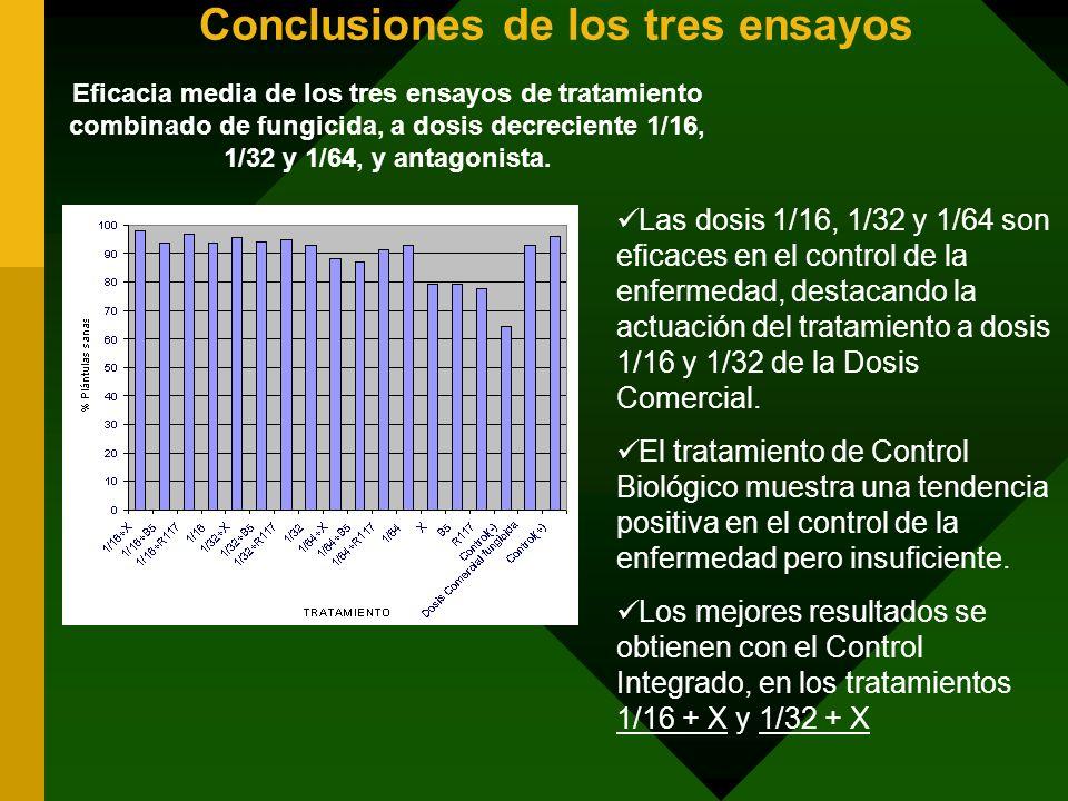 Conclusiones de los tres ensayos Eficacia media de los tres ensayos de tratamiento combinado de fungicida, a dosis decreciente 1/16, 1/32 y 1/64, y an