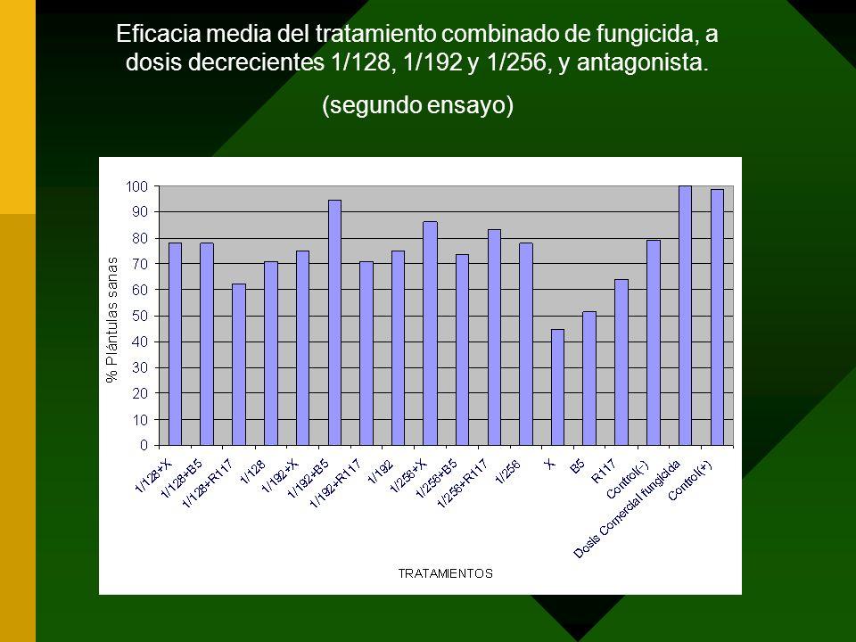 Eficacia media del tratamiento combinado de fungicida, a dosis decrecientes 1/128, 1/192 y 1/256, y antagonista. (segundo ensayo)