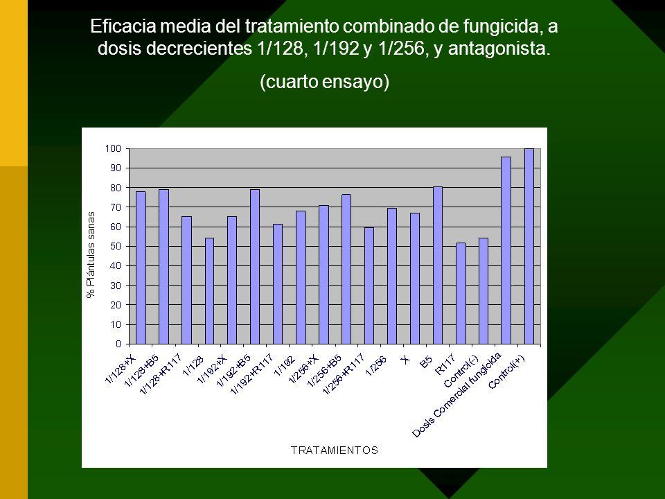 Eficacia media del tratamiento combinado de fungicida, a dosis decrecientes 1/128, 1/192 y 1/256, y antagonista. (cuarto ensayo)