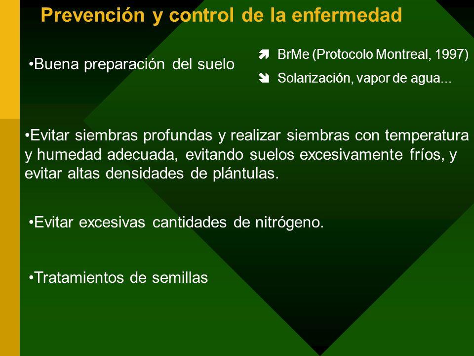 Prevención y control de la enfermedad Buena preparación del suelo BrMe (Protocolo Montreal, 1997) Solarización, vapor de agua... Evitar siembras profu