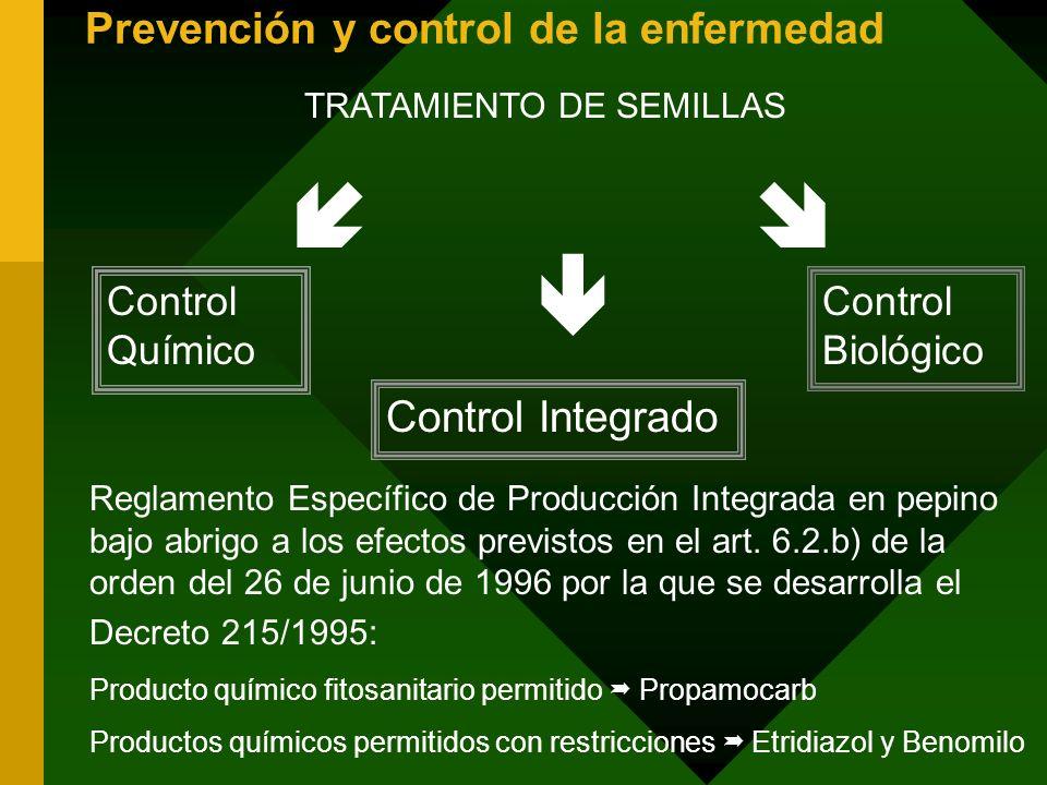 Prevención y control de la enfermedad TRATAMIENTO DE SEMILLAS Control Químico Control Biológico Control Integrado Reglamento Específico de Producción