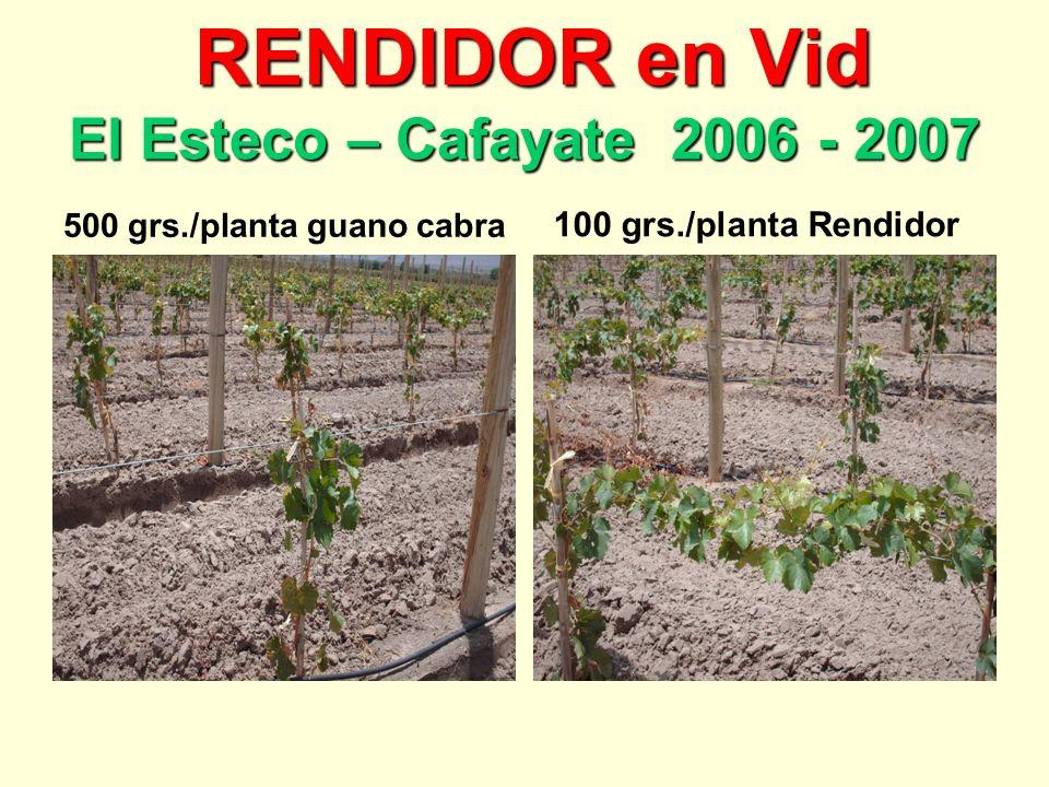 RENDIDOR en Vid El Esteco – Cafayate 2006 - 2007 RENDIDOR en Vid El Esteco – Cafayate 2006 - 2007 500 grs./planta guano cabra 100 grs./planta Rendidor