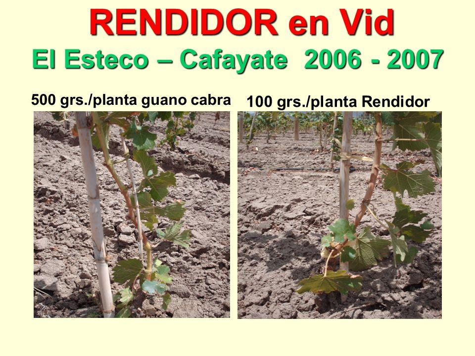 RENDIDOR en Vid El Esteco – Cafayate 2006 - 2007 RENDIDOR en Vid El Esteco – Cafayate 2006 - 2007 500 grs./planta guano cabra