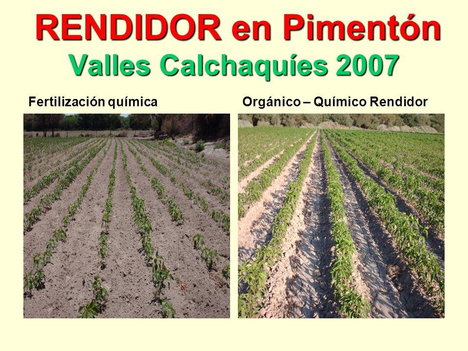 RENDIDOR en Pimentón Valles Calchaquíes 2007 RENDIDOR en Pimentón Valles Calchaquíes 2007 Fertilización químicaOrgánico – Químico Rendidor