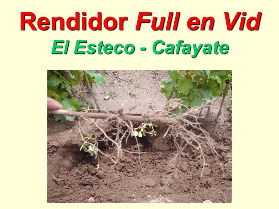 Rendidor Full en Vid El Esteco - Cafayate