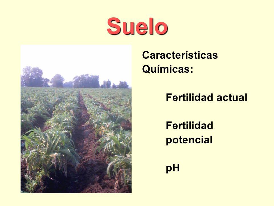 Suelo Características Químicas: Fertilidad actual Fertilidad potencial pH
