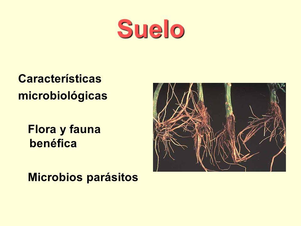 Suelo Características microbiológicas Flora y fauna benéfica Microbios parásitos