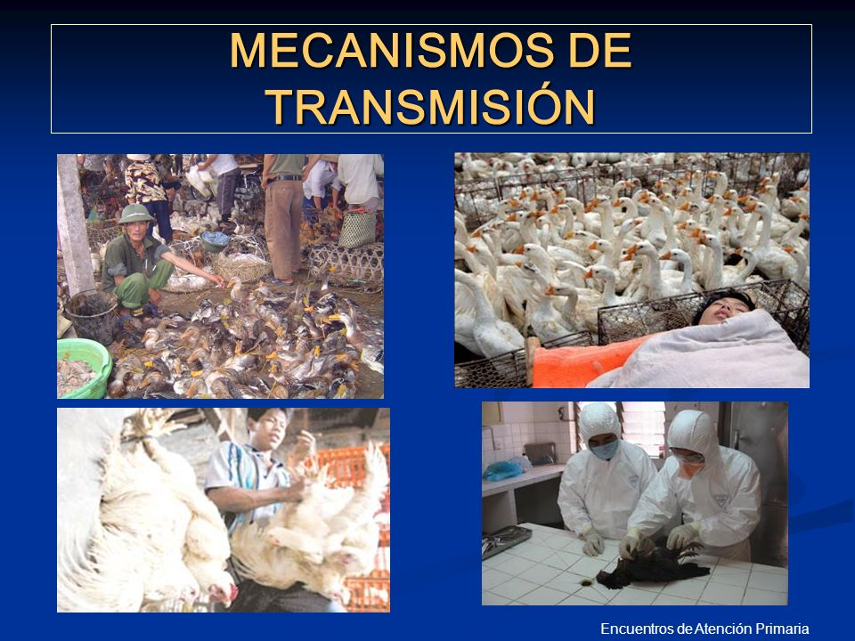 Encuentros de Atención Primaria MECANISMOS DE TRANSMISIÓN